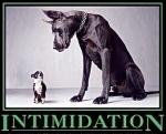 intimidationDog